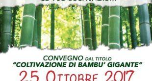 Coltivazione del bambù: un convegno per approfondire