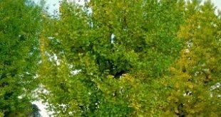 Domani si mettono a dimora nuovi alberi nelle scuole di Carmagnola