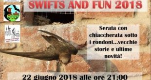 Swifts & Fun 2018