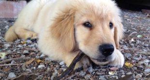 """""""4 zampe senza frontiere"""" per far adottare i cani del canile"""