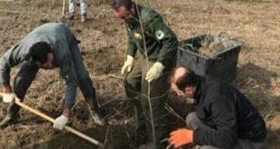 Cento nuovi alberi nel bosco del Gerbasso di Carmagnola