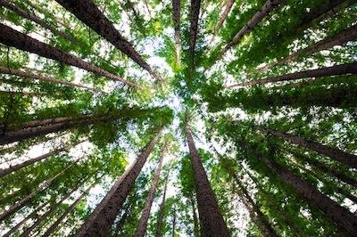 bosco urbano carmagnola