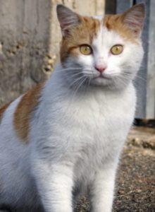 colonie feline carmagnola
