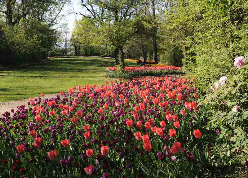 messer tulipano online