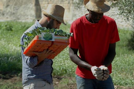 migranti settore agricolo piemonte manodopera 3