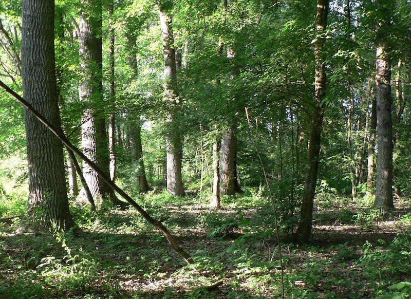 bosco del merlino manutenzione boschi foreste piemonte
