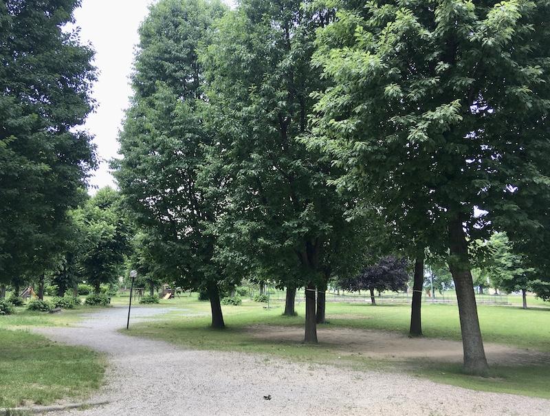 alberi parco vigna carmagnola
