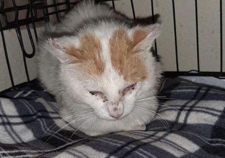 giulio appello gatti veterinario