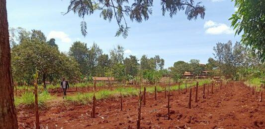 Crescere Insieme bambini del Kenya