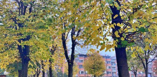 alberi carmagnola viale barbaroux