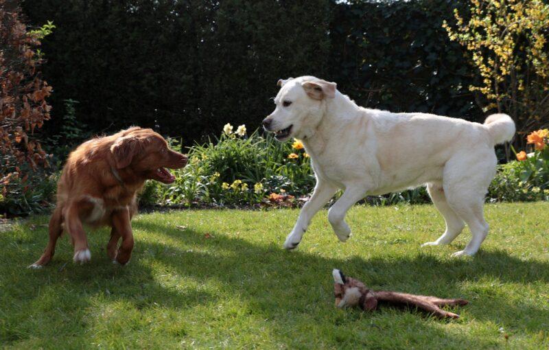 aree cani carignano
