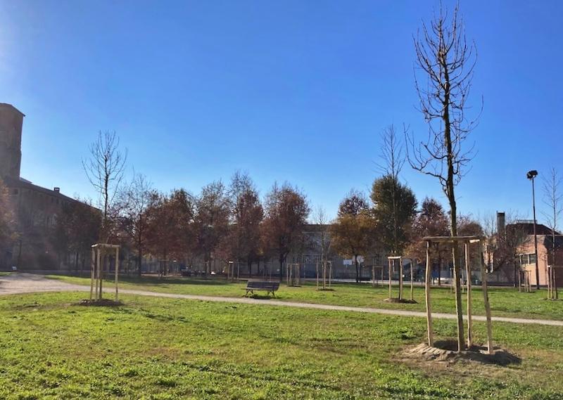 nuovi alberi a carmagnola
